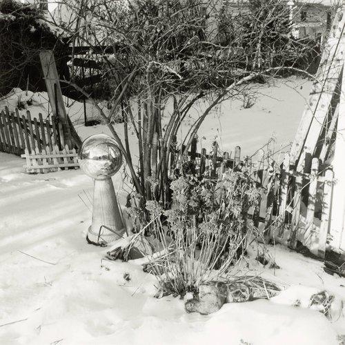 Home Garden, NE Corner, January