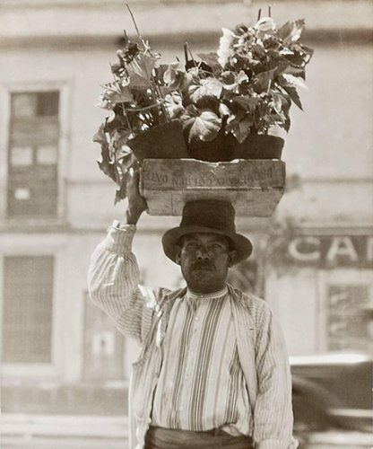 Untitled (Man with Box of Plants on His Head)
