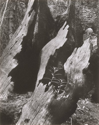 Z cyklu Pralesy (From the Virgin Forests Cycle), from the series Jaromír Funke