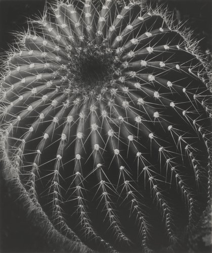 Untitled (Cactus, Santa Barbara)