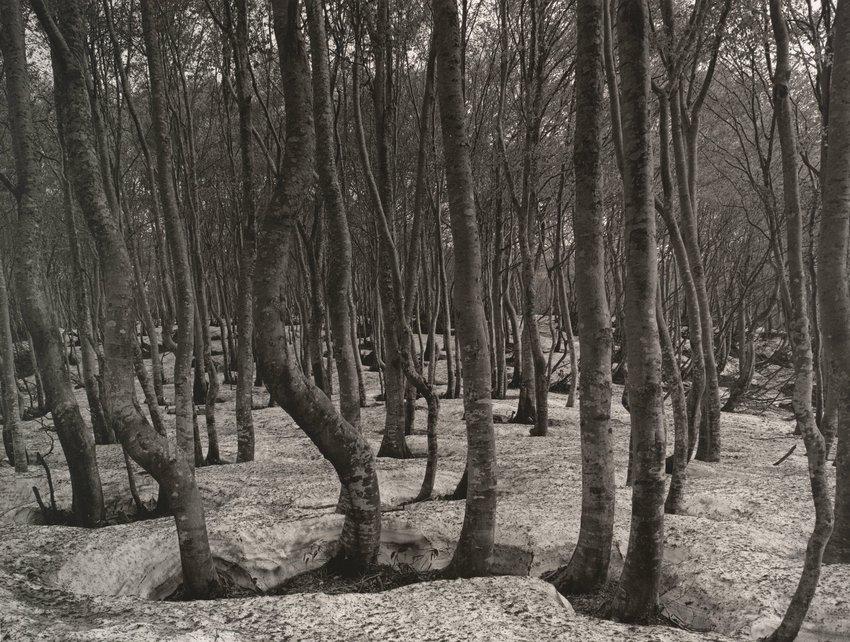 image of 'Mt. Chyokai #63'