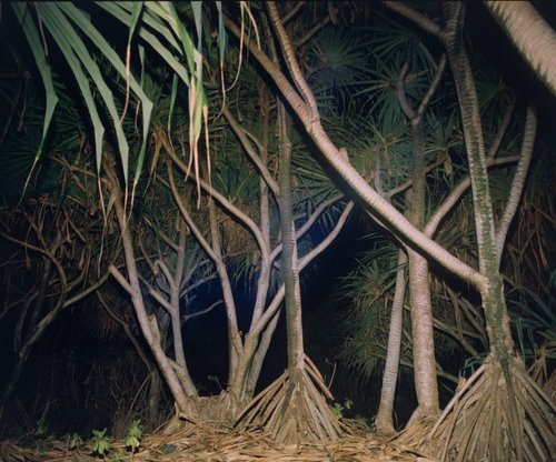 Hawaii VII, from the series Hawaii