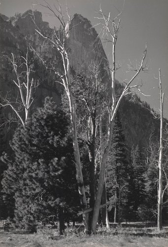 Untitled [Yosemite Valley]