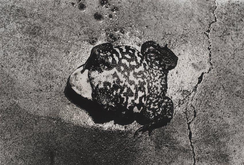 "image of DOCUMENTARY ""'86.8 Koshu, Shinshu"" 108 (Takabe, Chino City, Nagano Prefecture)"