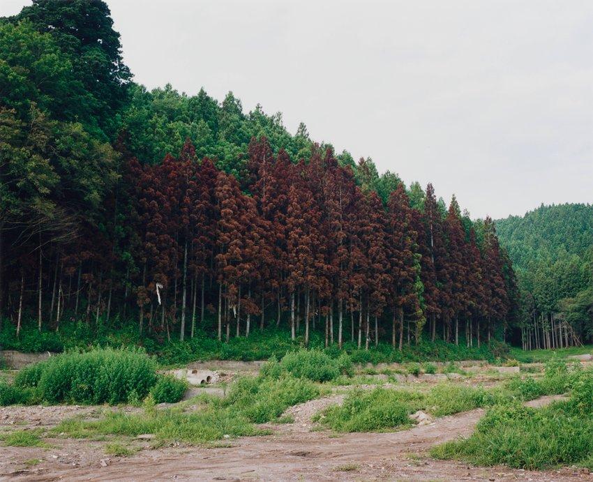image of Kesen-cho, 2011.8.7, from the series Rikuzentakata