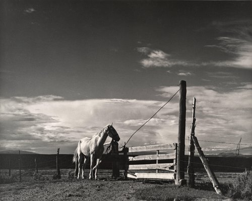 White Horse, Ranchos de Taos, New Mexico
