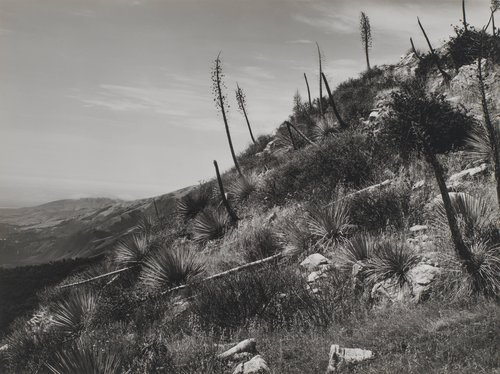 Yucca Post's Ridge, Big Sur #1