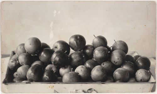 Untitled [Apples]