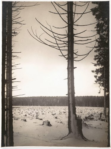 Winterlicher Wald (Winter Forest)