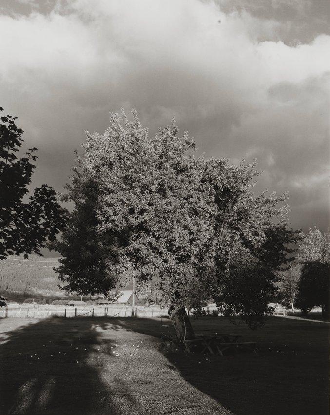 image of 'Apple Tree, near Halfway, Oregon'