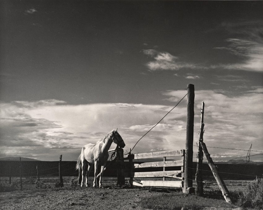 image of 'White Horse, Ranchos de Taos, New Mexico'