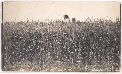 Untitled [Man holding a hat, concealed in a wheat field]