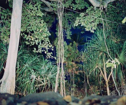 Hawaii IX, from the series Hawaii