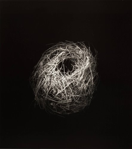 Ploceus nigricollis (Black Weaver), from the series Grid of Nests