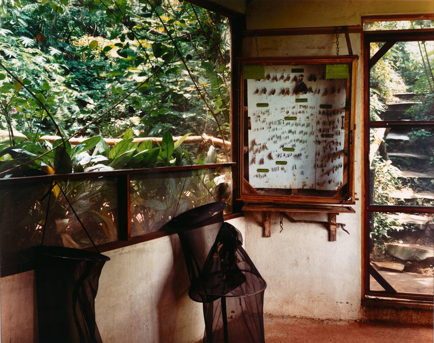 image of 'Butterfly Farm, La Guácima, Costa Rica, from the series No Ordinary Land'