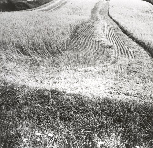 Directed Harvest (stage 3). 1000' span, Hamburg, Pennsylvania. Massey Harris Harvester was directed by the artist to break down surface in linear patterns. Trucking and processing is included in later stages of sculpture. Land owner: Lester A. Adams.