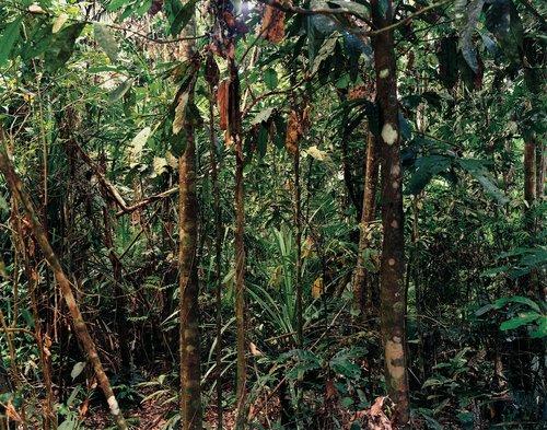 Paradise 4, Daintree, Australia, 1998