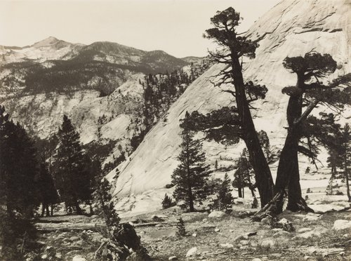 Sierra Junipers, from the portfolio Parmelian Prints of the High Sierras