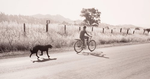 Larry Gardner on Bicycle with Dog, Berryessa Valley, from the series Death of a Valley