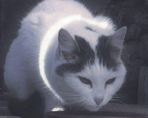 Büsi (Kitty)