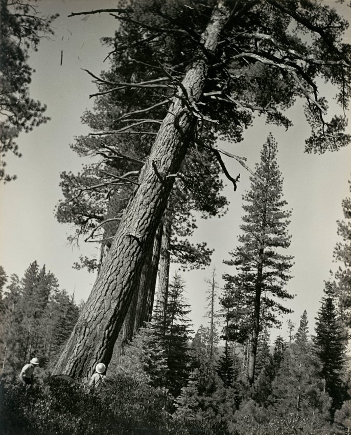 image of 'Untitled (The faller decides where the tree must lie on the ground), from the Red River series'