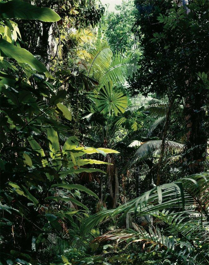 image of Paradise 1, Daintree, Australia, 1998