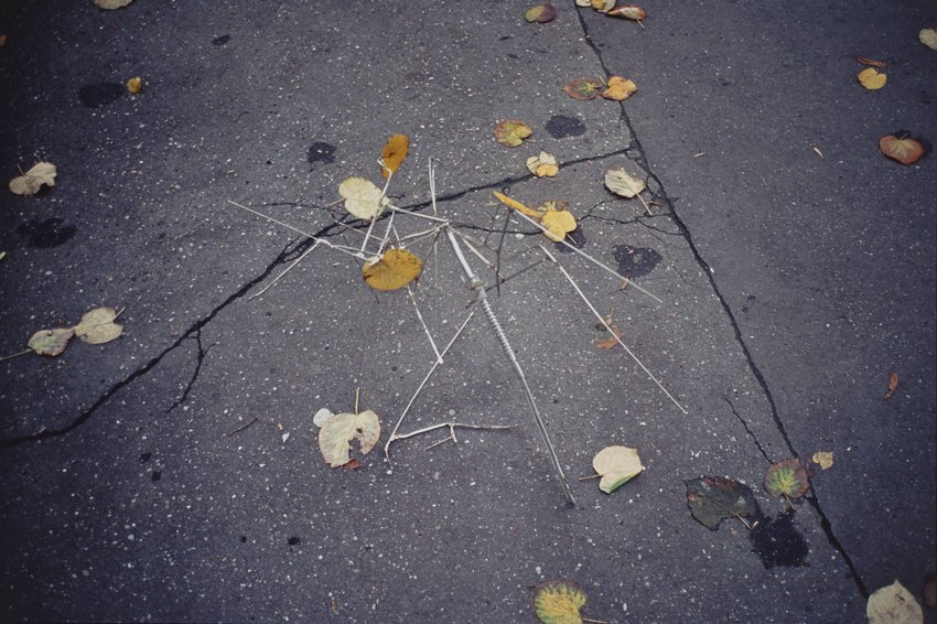 image of 'Autumn Umbrella'