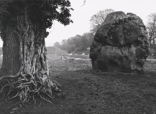 Stone and Tree, Avebury, England