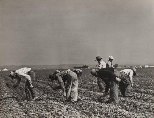 Filipino Lettuce Workers, Castroville, California