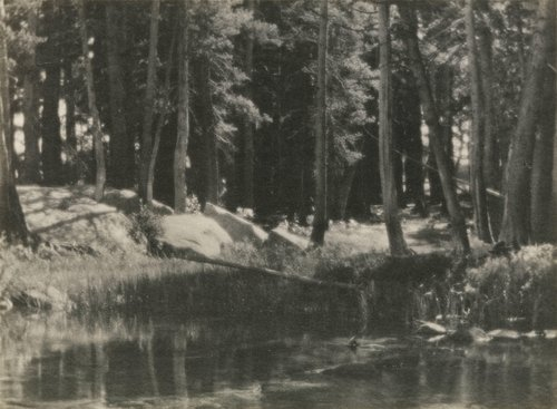 A Grove of Tamarack Pine, from the portfolio Parmelian Prints of the High Sierras