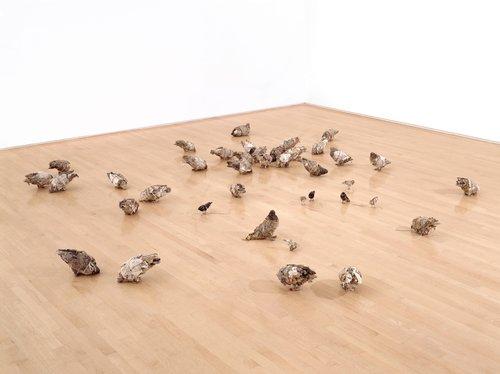 Untitled (Pigeons, sparrows & blackbirds)