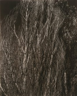 Image for artwork Poplars—Lake George