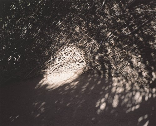 Untitled, from the series What Light Remains in the Absence