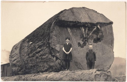 Untitled [Girl and boy standing in front of a downed tree trunk]
