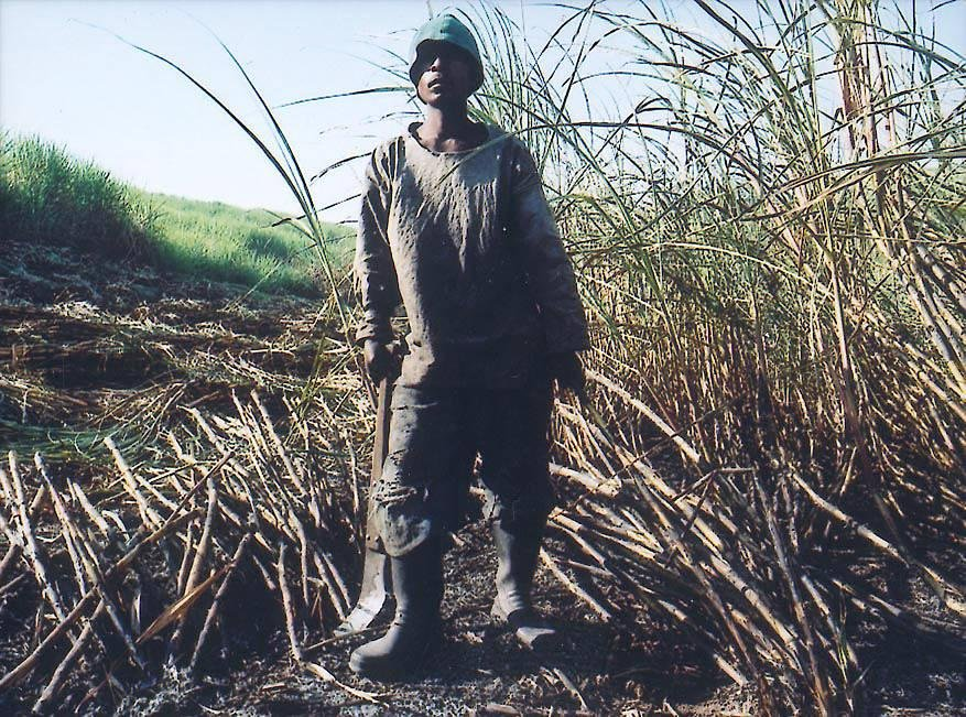 image of 'Untitled, from the series Sugar Cane'