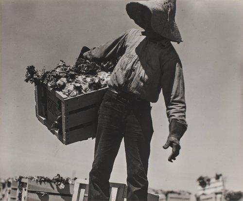 Filipino Lettuce Workers