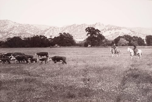 Cattle Drive #2, from the series Death of a Valley