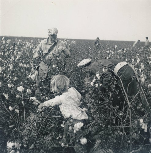 Untitled [Girl picking cotton], Buttonwillow, California