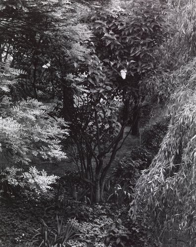 The Garden, Orgeval, from the portfolio The Garden