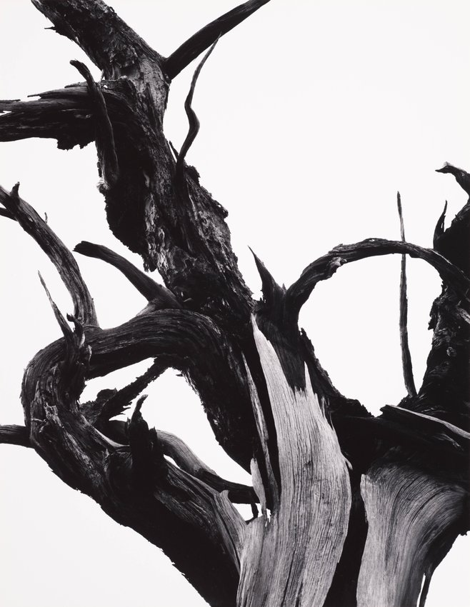 image of Dead tree, Sunset Crater National Monument, Arizona, from Portfolio Two: The National Parks and Monuments