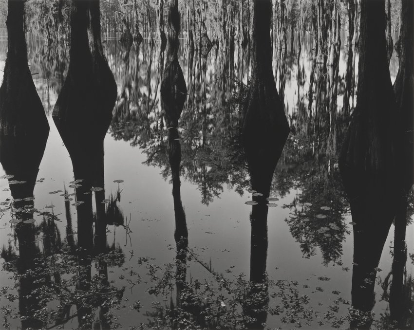 image of Untitled (Swamp - Deep South)