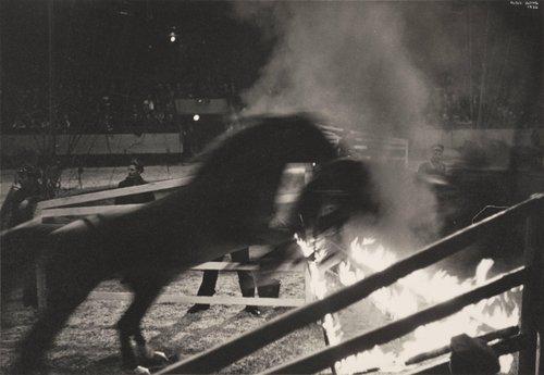 Circus, Madison Square Garden, New York