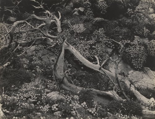 Untitled (Tree Roots with Succulents)
