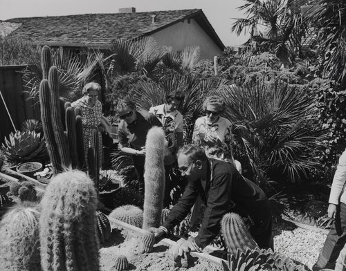 I had over 4,000 cacti plants, from the portfolio Leisure