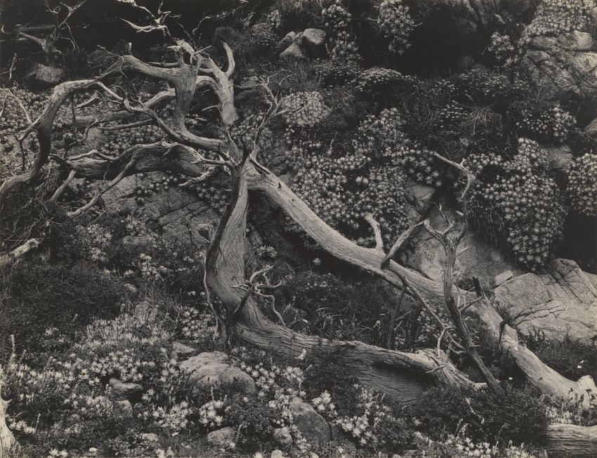 image of Untitled (Tree Roots with Succulents)