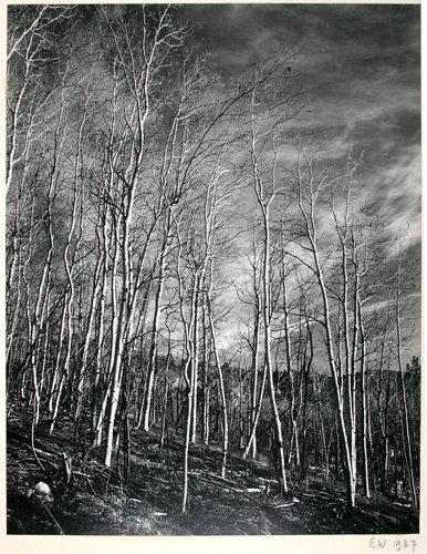 Aspen Valley, N.M.