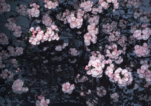 Untitled [Tokyo], from the series Cherry Blossoms