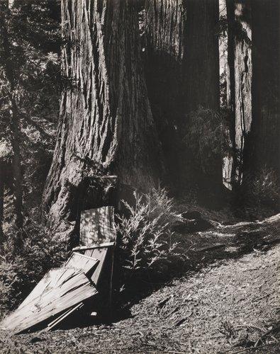 Redwoods, Palo Colorado Canyon, Sur Region #3