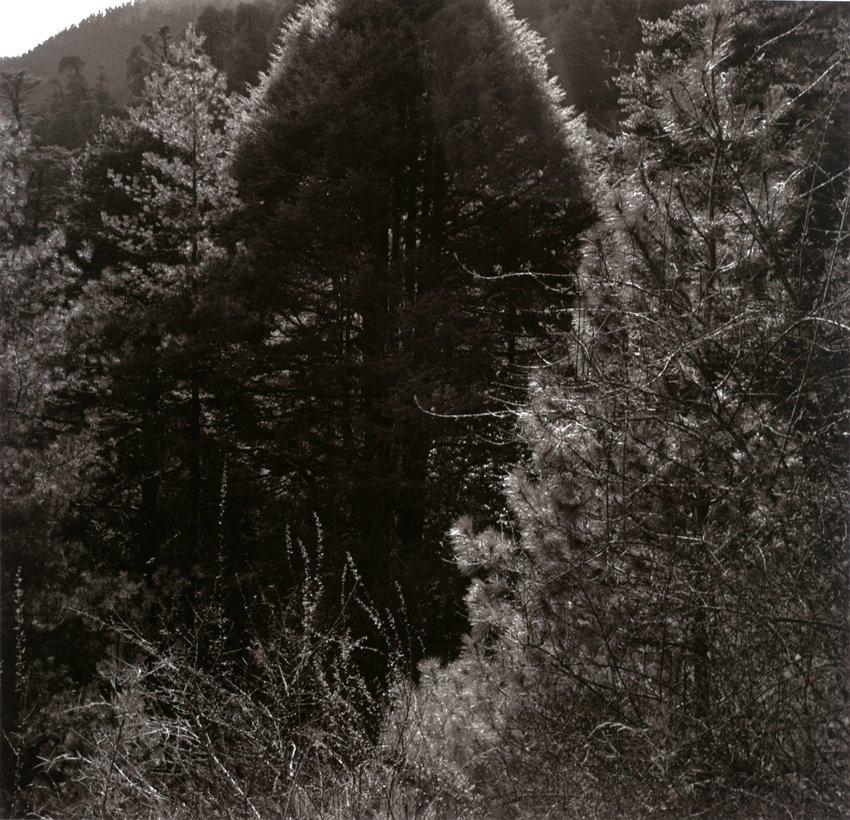 image of 'Phobjika Valley, Bhutan'