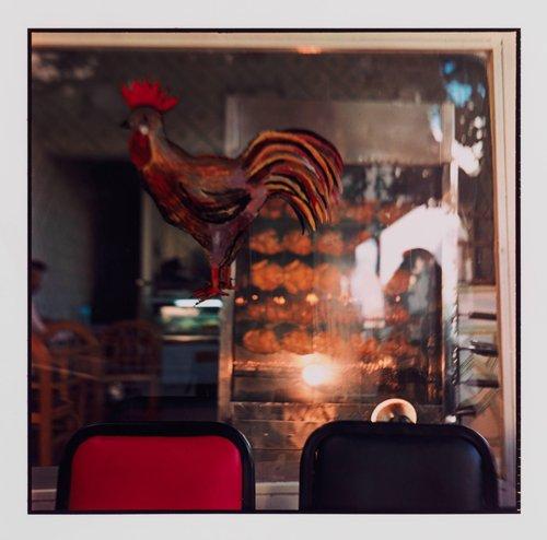 Mister Chicken